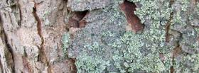 free trunk close up nature facebook cover