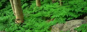 free plants and trees nature facebook cover