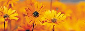 free orange flowers nature facebook cover