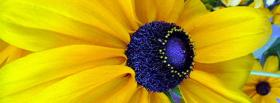 free yellow and blue flower facebook cover