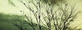 free sombre tree nature facebook cover