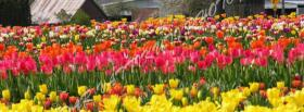 free tulips garden nature facebook cover