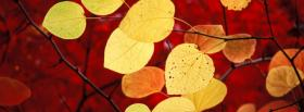 free yellow leaves autumn facebook cover