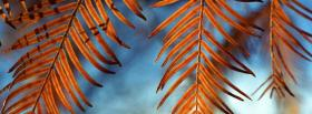 free wind catchers nature facebook cover