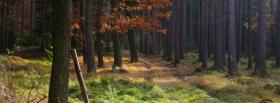 free walk in the forest nature facebook cover