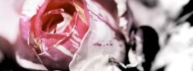 free rose flower nature facebook cover