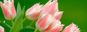 free pink tulips nature facebook cover