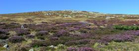 free purple plants nature facebook cover