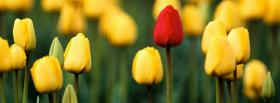 free tulips nature facebook cover