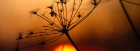 free sunset plant nature facebook cover
