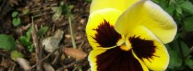 free summer yellow flower facebook cover