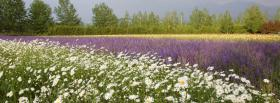 free white purple garden nature facebook cover
