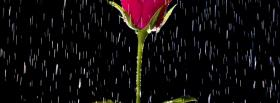 free raining on rose nature facebook cover