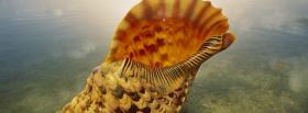 free shell nature facebook cover