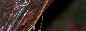 free rainforest water nature facebook cover