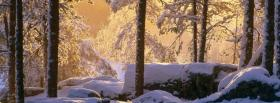 free snowy pine forest nature facebook cover