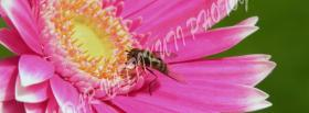 free pink flower bee nature facebook cover
