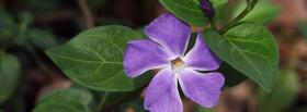 free purple flower nature facebook cover