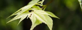 free simplistic leaf nature facebook cover