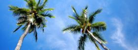 free tall palm trees nature facebook cover