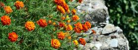 free orange garden nature facebook cover