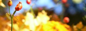 free red plants nature facebook cover