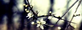 free white incredible flowers nature facebook cover