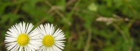 free spring flowers nature facebook cover