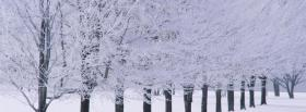 free white winter trees nature facebook cover