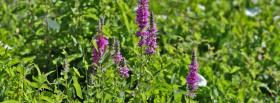 free wild purple flowers nature facebook cover