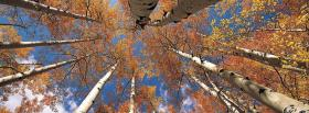 free top of autumn trees nature facebook cover
