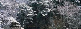 free trees and snowfall nature facebook cover