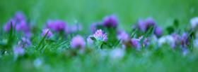 free purple flowers grass nature facebook cover