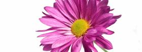 free simple pink flower nature facebook cover