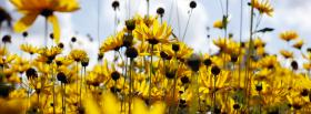 free sunflower garden nature facebook cover