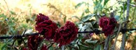 free pink flower roses nature facebook cover