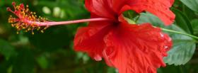 free red nice flower nature facebook cover
