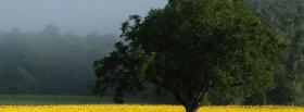 free sunflower field nature facebook cover