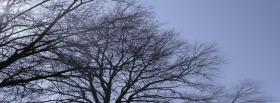 free tree height nature facebook cover
