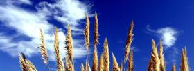 free view of wheat nature facebook cover