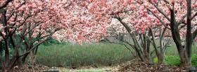 free pink forest nature facebook cover