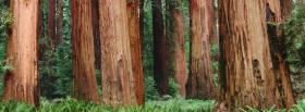 free tree trunks nature facebook cover