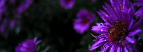 free purple flowers nature facebook cover