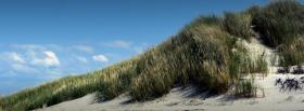 free plants and sand nature facebook cover