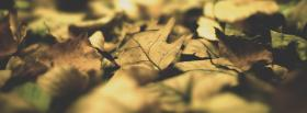 free soft leaves nature facebook cover