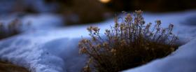 free snow and plant nature facebook cover