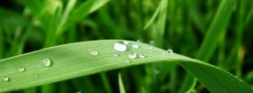 free water on plant nature facebook cover