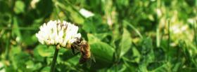 free white flower and grass facebook cover