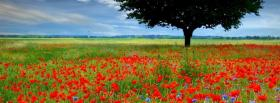 free tree red flowers nature facebook cover