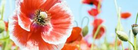free red white flower nature facebook cover